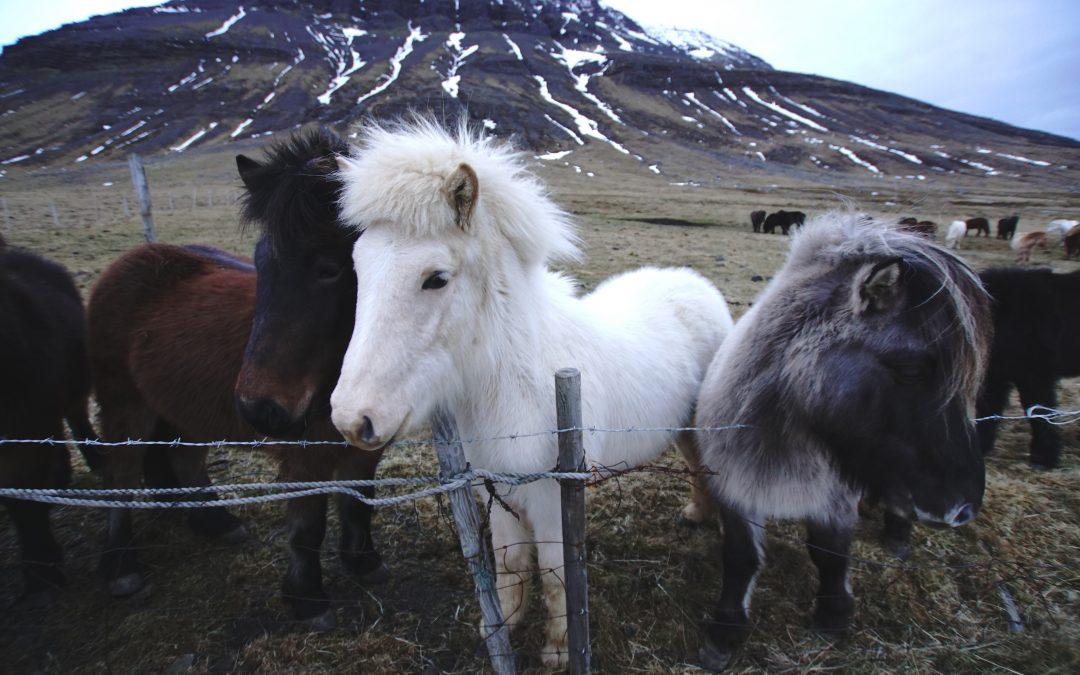Weihnachten in Island